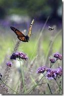 pratiquez.le.papillonnage.en.seduction.photo.jelrdan